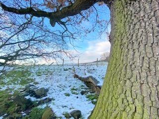 Acomb Parish Council Tree